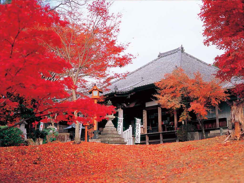 Jakkoin Temple in Autumn