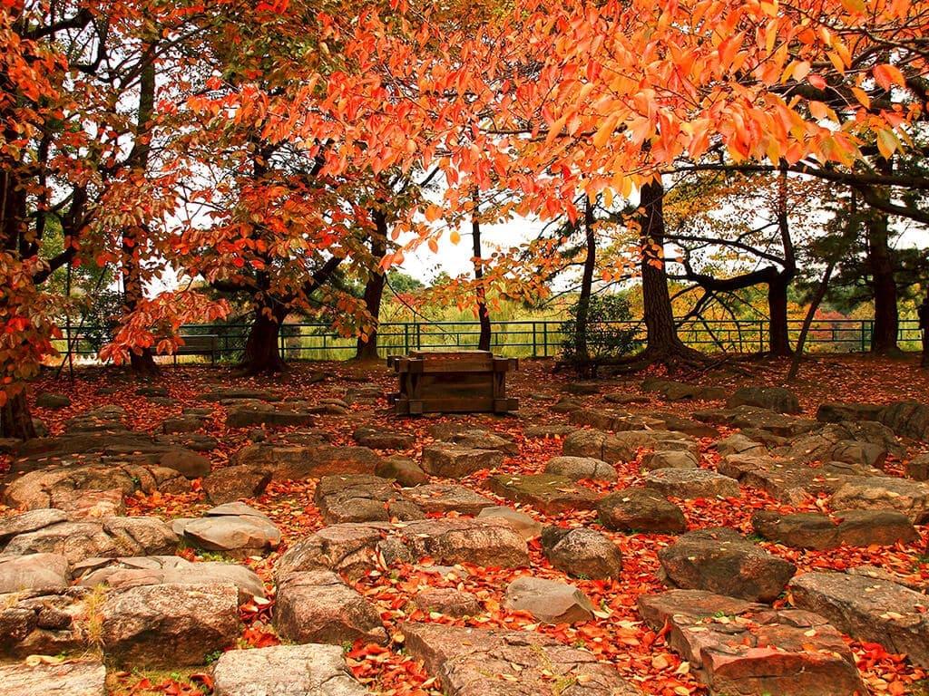 Meijo Park in autumn