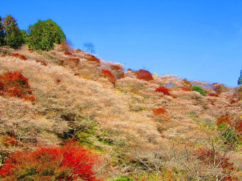 Obara Fureai autumn