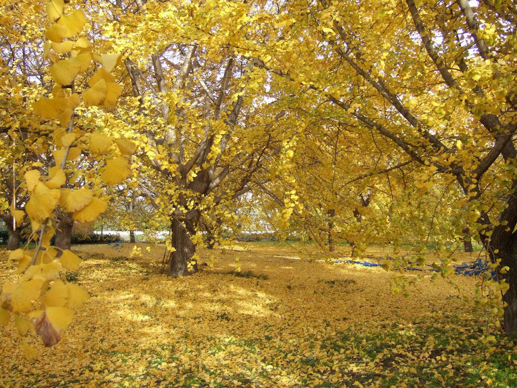 Sobue in Autumn