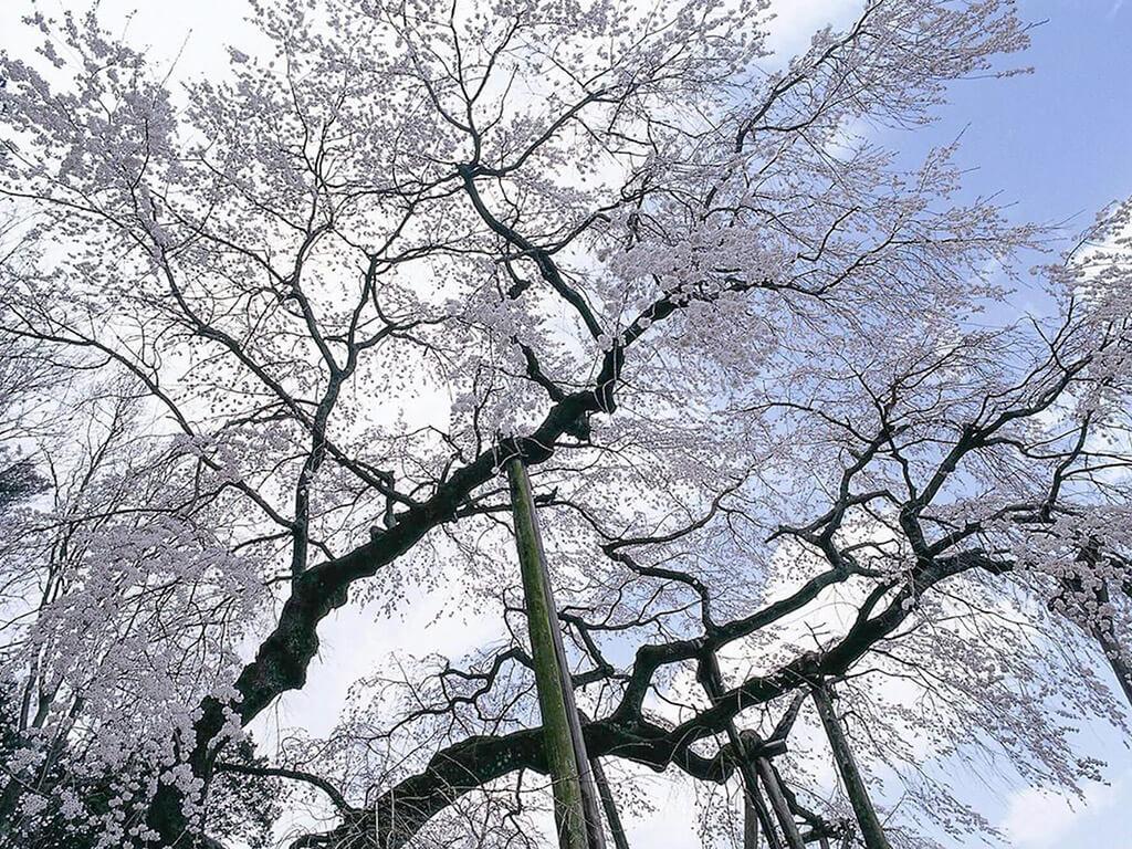 Okuyamada