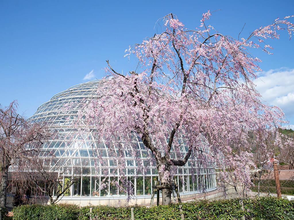 Togokusan park
