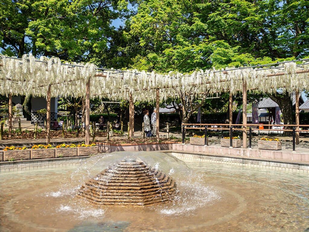 Mandara Park wisteria