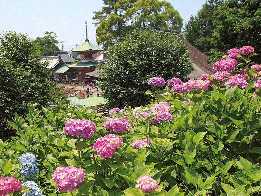 Otsuka Shokaiji Temple Hydrandreas