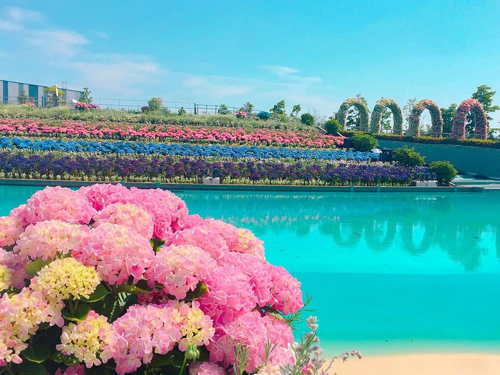 Lagunasia Flower Lagoon